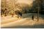 Wigmore & Hempstead Snow 1987